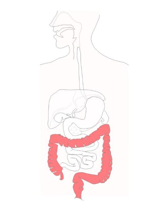 大腸・肛門