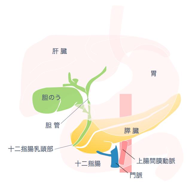 痛み 膵臓